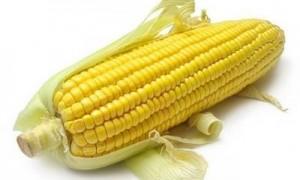 Как правильно хранить кукурузу?