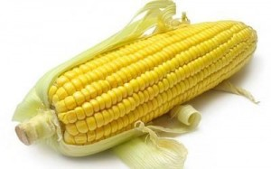 Купит Гибрид кукурузы Днепровский 181 СВ