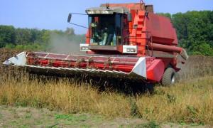 Агротехнические аспекты сбора урожая подсолнуха