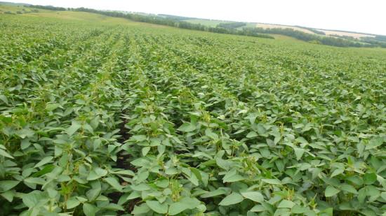 семена сои мерлин в украине