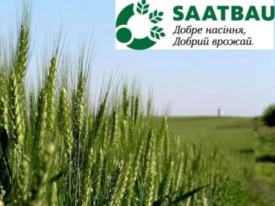 озимая пшеница тацитус купить украина