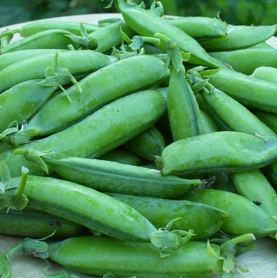 купить семена гороха стабил