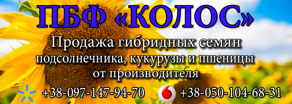 ПБФ Колос. Продажа семян подсолнечника и кукурузы от производителя